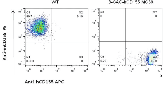 B-CAG-hCD155-MC38-Cell-Line-details-phenotypic-analysis