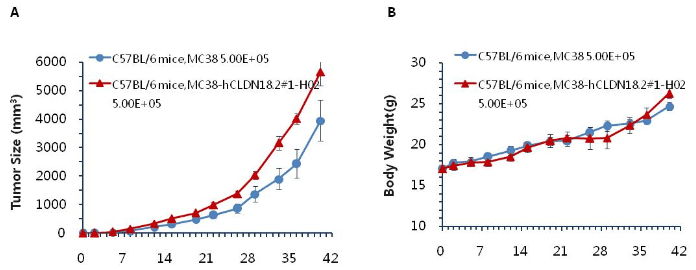 B-CAG-hCLDN182-MC38-Cell-Line-details-growth-tumor-curve