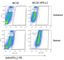 B-CAG-hPD-L2-MC38-Cell-Line-details-tumor-cells-analysis
